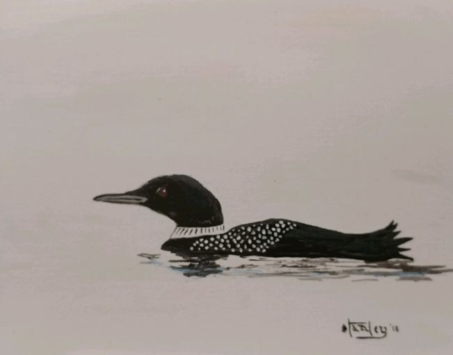 Loon on white - Southwestern Paintings by David
