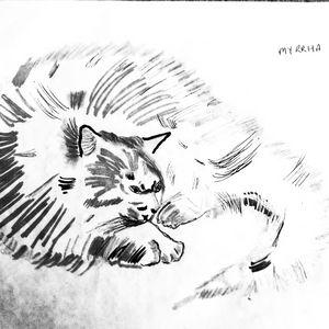 The Cat. - Glennis Cane