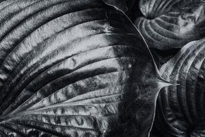 Souls of Plants pt 1