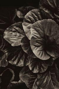 Souls of plants pt 6