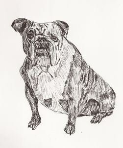 bulldog drawing with pen
