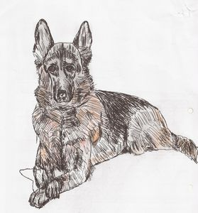 German shepherd  dog painting