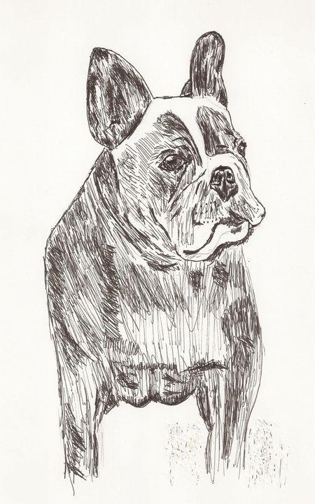 french bulldog - Tony Antoniou