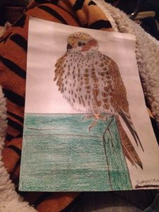 Bird - Siobhaun Robb