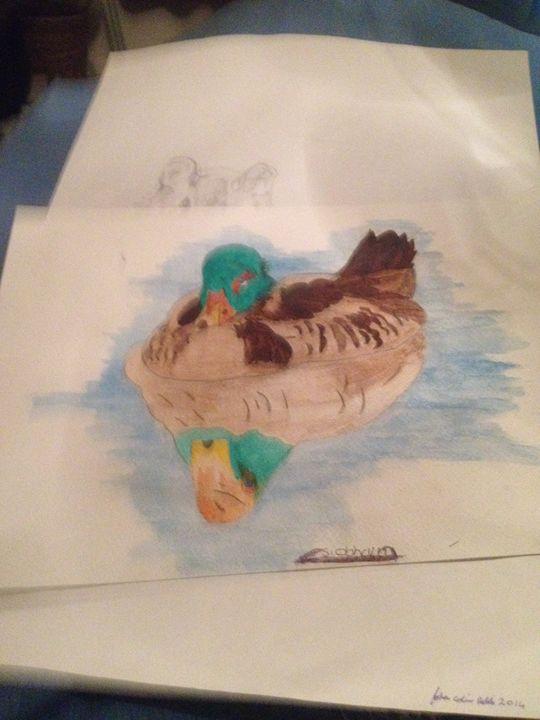 Duck - Siobhaun Robb