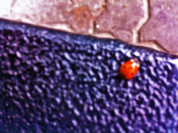 Lonely Colourful Beetle - biccsworldArt