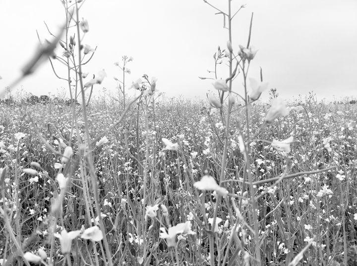 Beautiful field - biccsworldArt