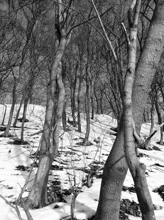 Snow Covered Field - biccsworldArt