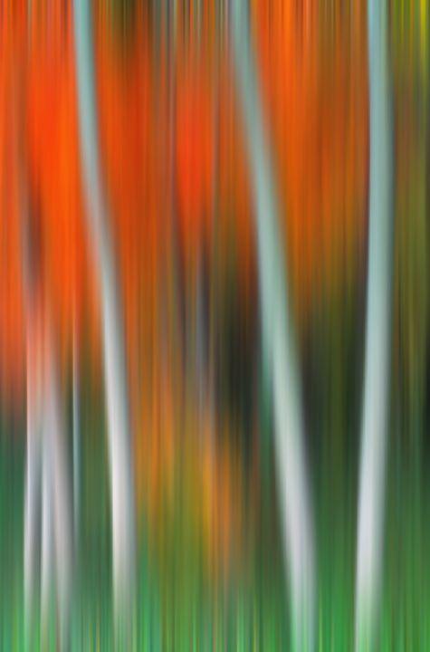Autumn Abstract Colors - Foto Safari