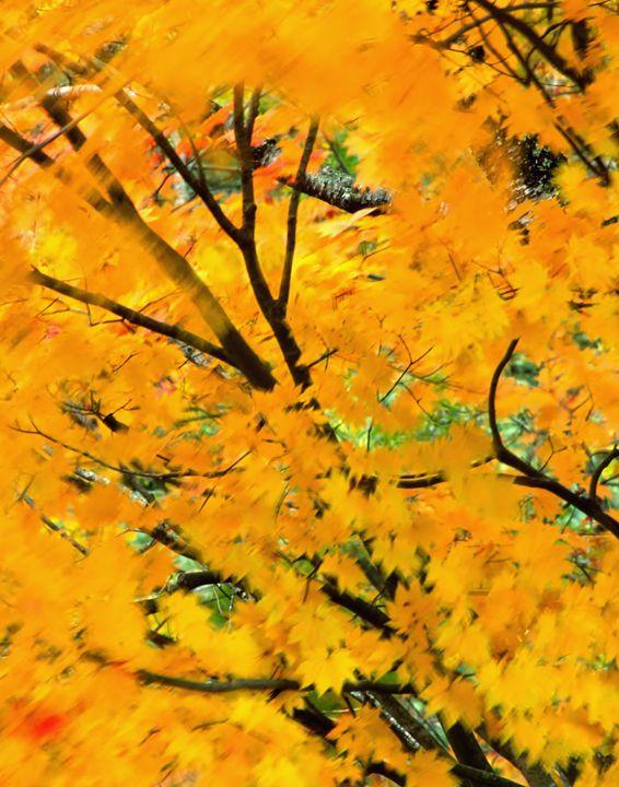Blowing Leaves - Foto Safari