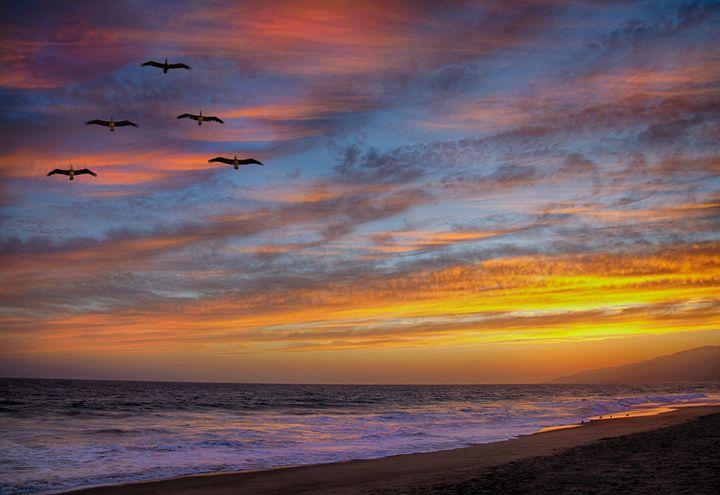 Sunset Flight - Foto Safari