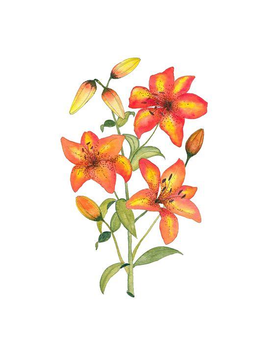 Orange Tiger lily - Artligator