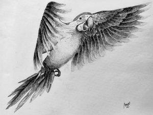 Parrot Sketch