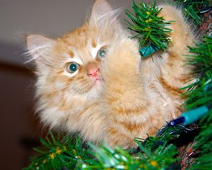 Christmas Tree Kitten