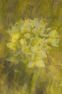 Wild Wind - Nena Trapp Photography