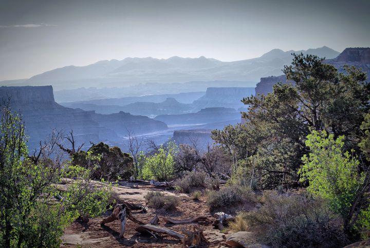 Canyon Silhouettes - Nena Trapp Photography