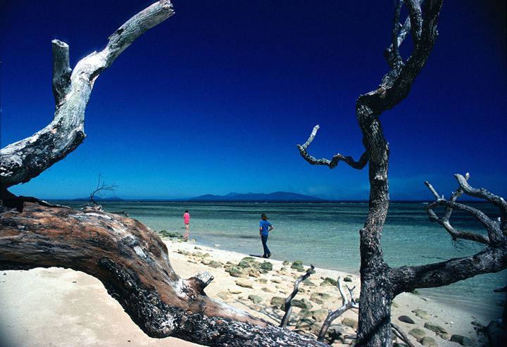 On Heron Island on Barrier Reef - Carl Purcell - Global Photography