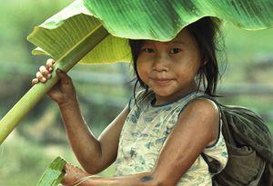 Banana Leaf Umbrella - Carl Purcell - Global Photography