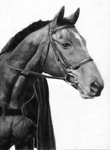 Custom pet pencil drawing