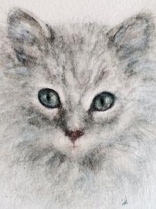 """Rag Doll Kitten """"Natty"""""""