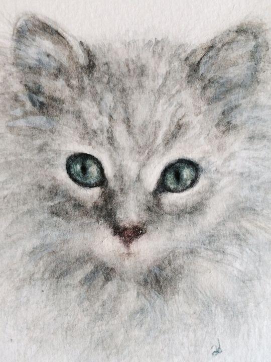 "Rag Doll Kitten ""Natty"" - Alice DiGiovanni"