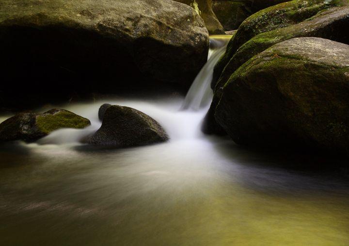 Golden - David Hopkins Photography