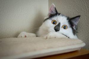 Funny tuxedo cat