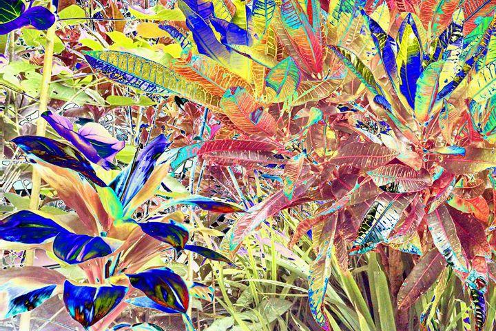Fantasticalation - Sabaya Art