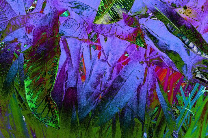 Deep Purple - Sabaya Art