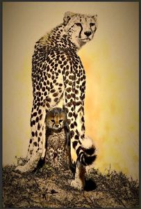 Cheetah mom