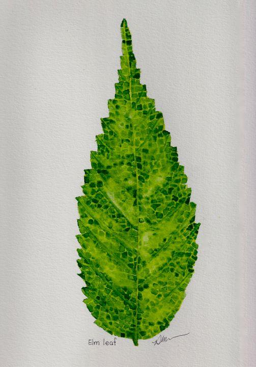 Elm leaf - Diane Messer Gallery