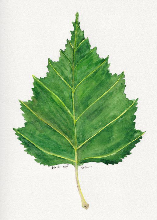 Birch leaf - Diane Messer Gallery