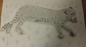 Lazing Cheetah