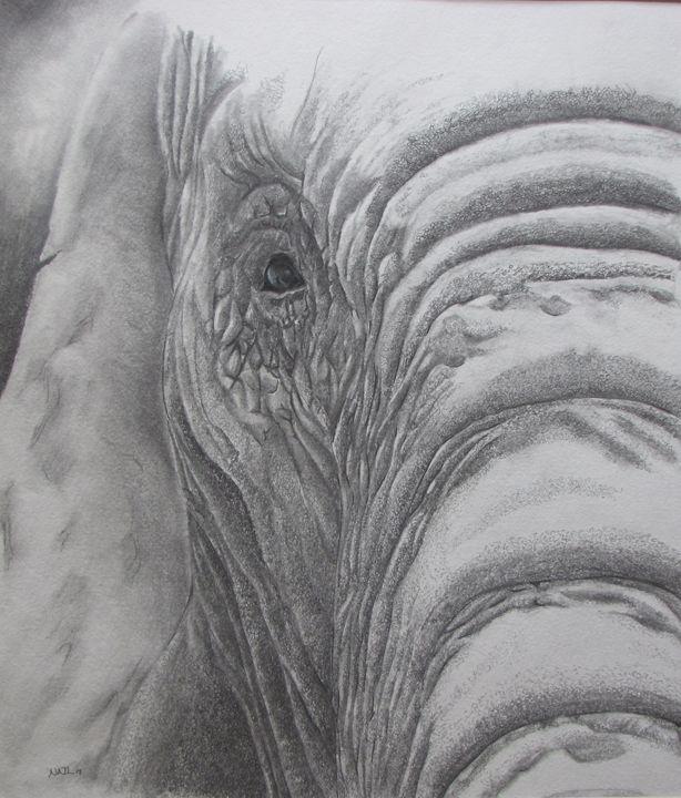 """Old Bull"" - Pencil by Nail"