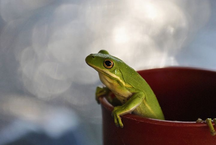Frog in a cup - AvH Editing
