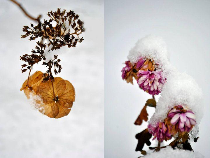Winter Flowers - AvH Editing