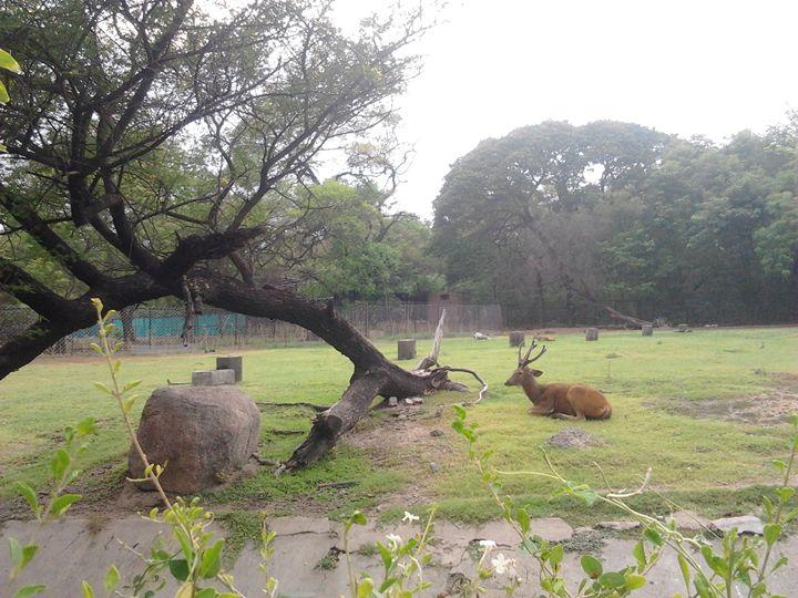 Deer in nature - Divine art