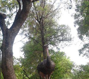 Ostrich - Divine art