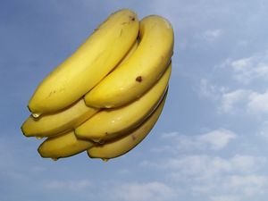 Floating bananas