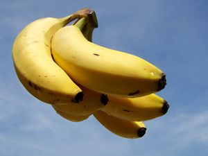 Floating bananas