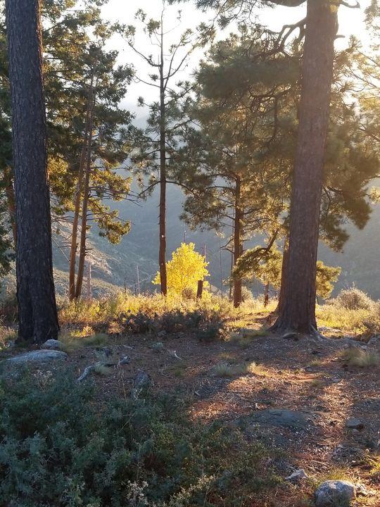 Mountain sunrise - Lifesthings