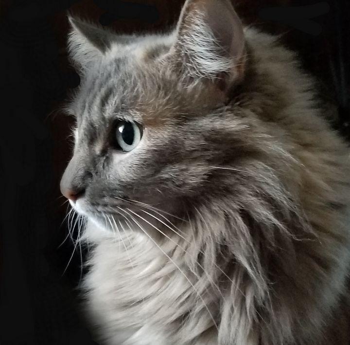 Cat portrait - Lifesthings