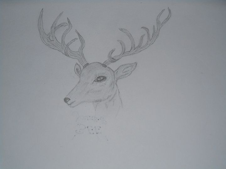 Deer - Holly's Gallery of Art