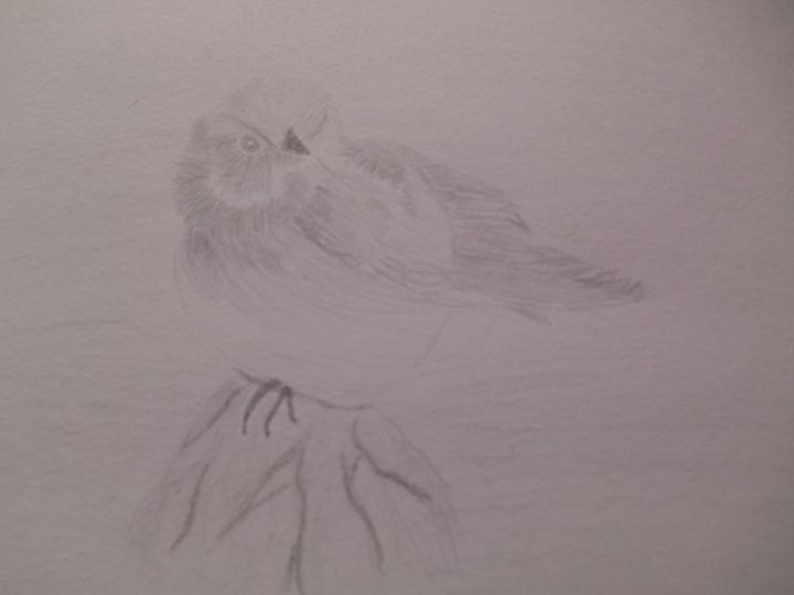 Bird - Holly's Gallery of Art