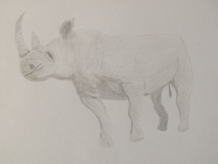 Rhino - Holly's Gallery of Art
