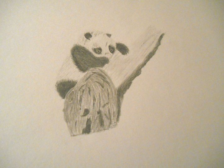 Panda - Holly's Gallery of Art