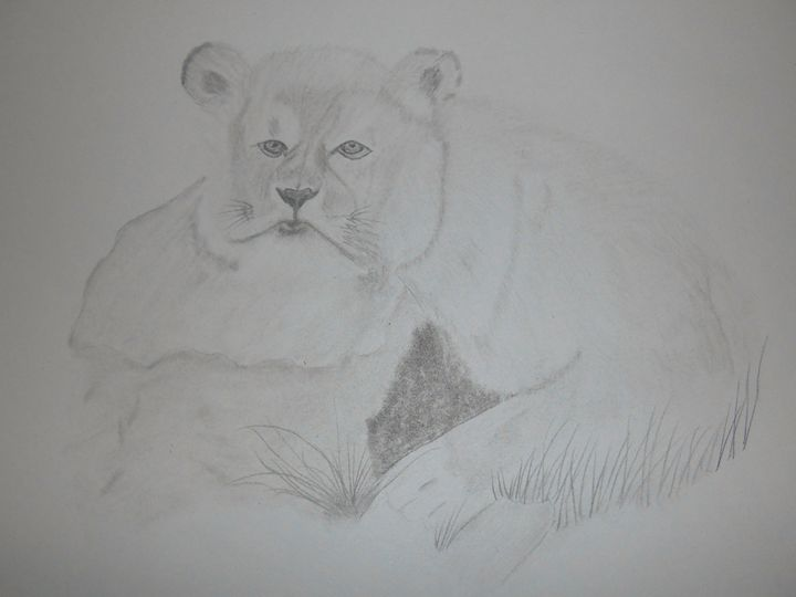 Lioness - Holly's Gallery of Art