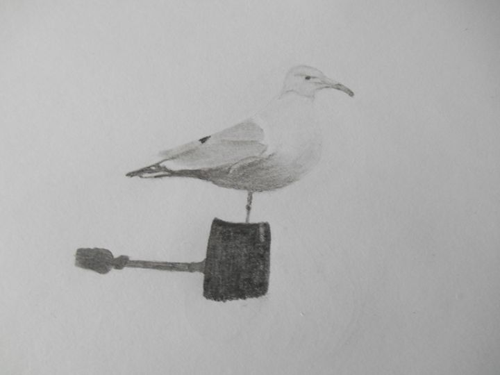 Sea Gull - Holly's Gallery of Art