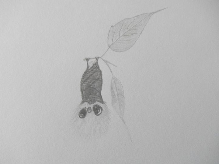 Fruit Bat - Holly's Gallery of Art