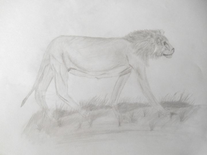 Lion - Holly's Gallery of Art